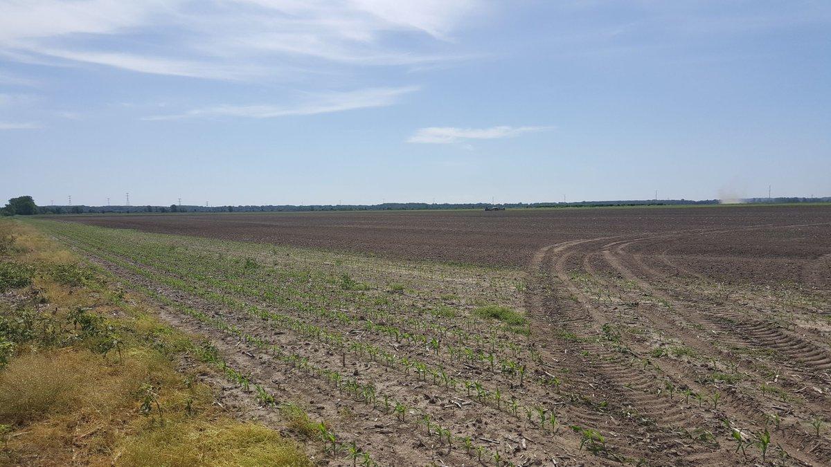 Farmers replanting a field in Northeast Missouri