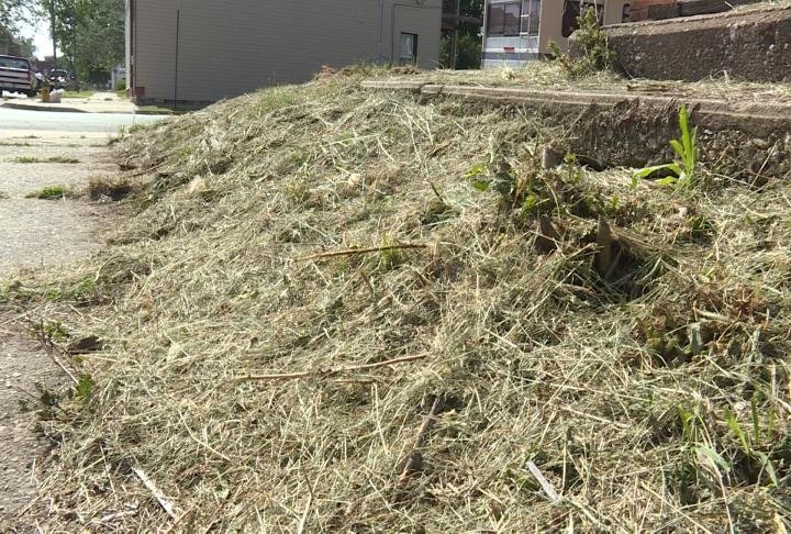 Dead grass lays on the grown after city crews cut the grass after a nuisance complaint.