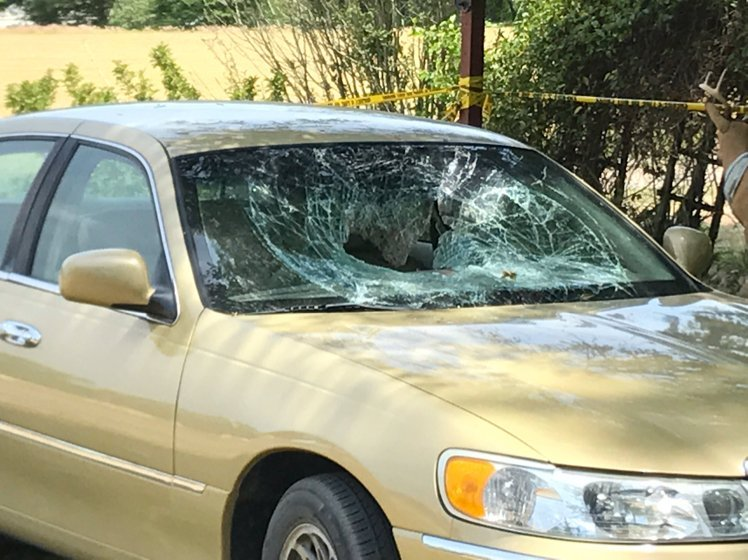 Car windshield shattered.