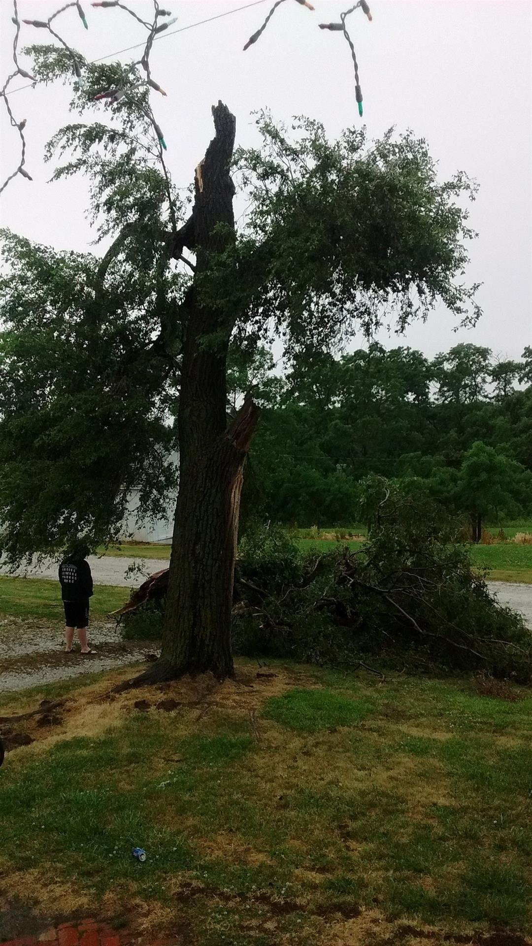 Tree damaged Wednesday in Rushville at 2 p.m. (Submitted by Rick Carty)