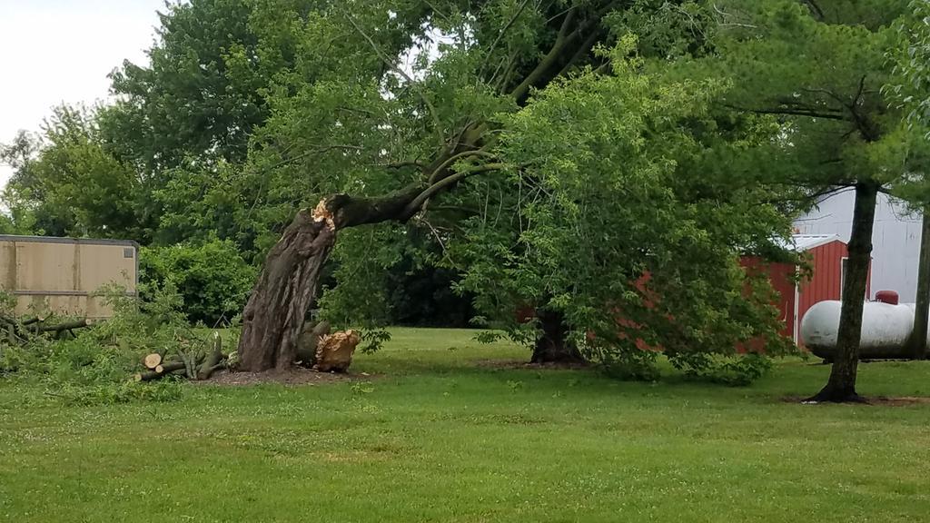 Tree damage in Bethel, Missouri.