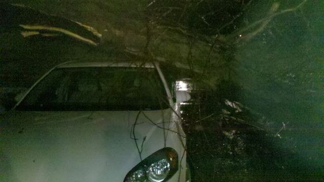 An uprooted tree tossed onto a car in Hannibal. (WGEM Photo)