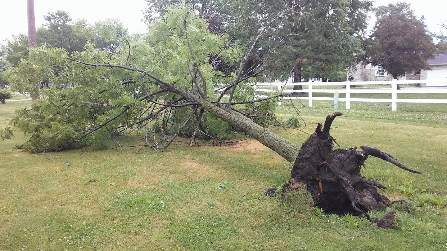 Tree knocked down in Lewistown, Missouri. (Submitted by Aaron Van Lay)