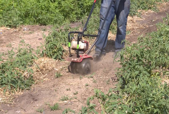 Volunteers getting rid of weeds