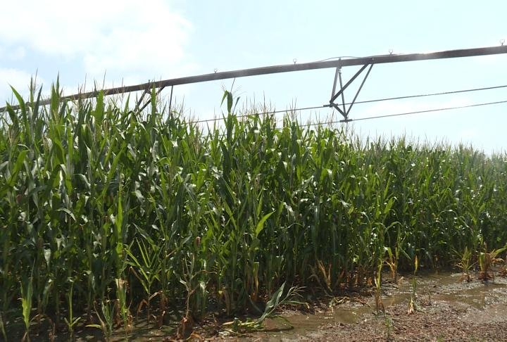 Irrigation at Koeller's Farm.
