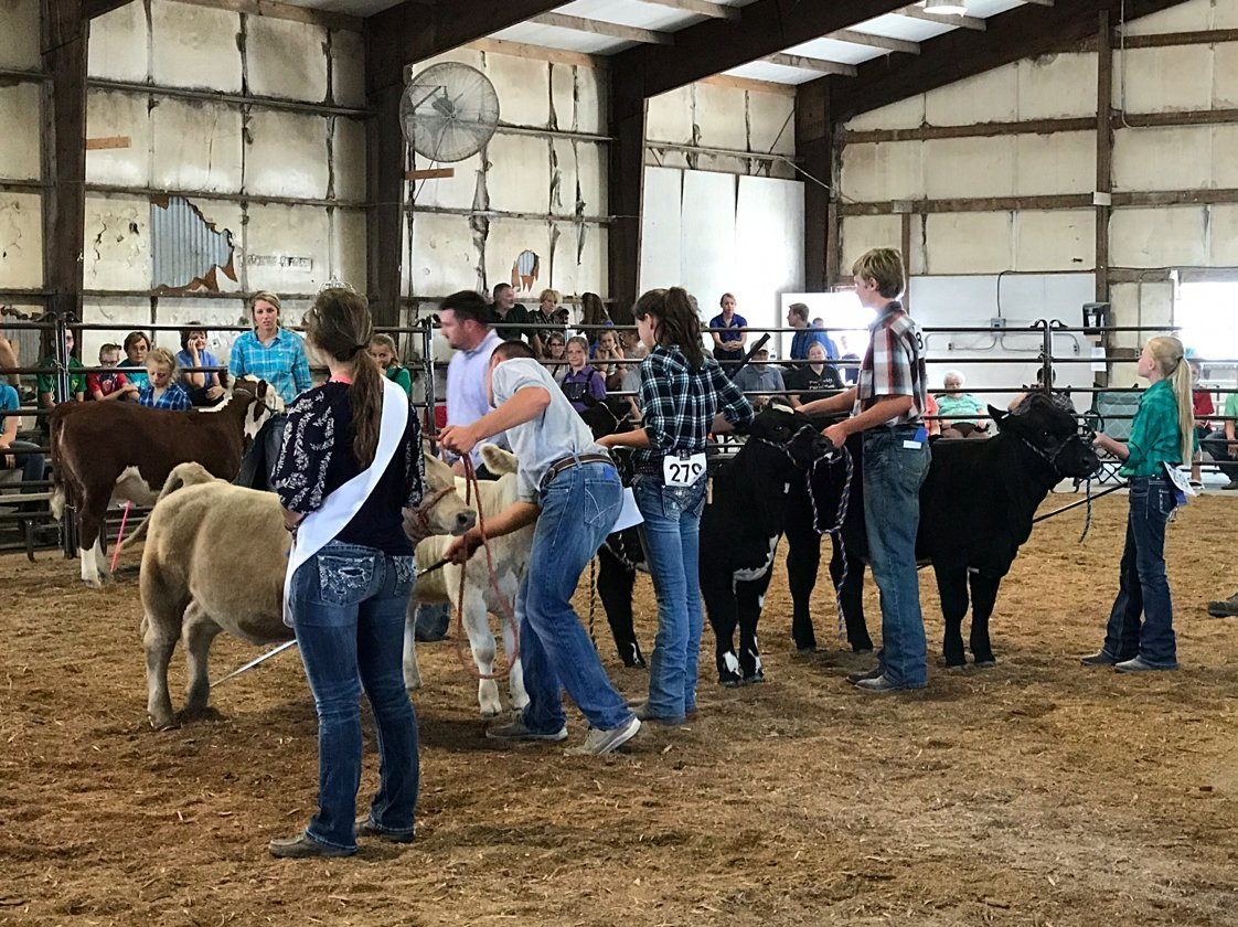 4-H beef judging competition