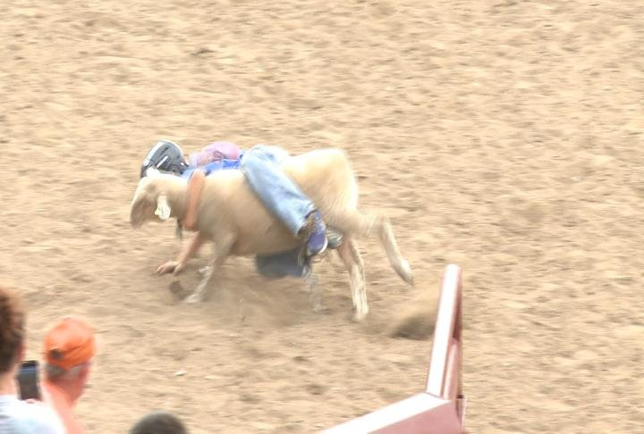 Kids calf riding this morning at the Tri-State Rodeo Grounds.