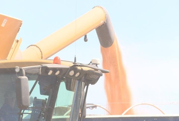 Corn being transferred from a combine