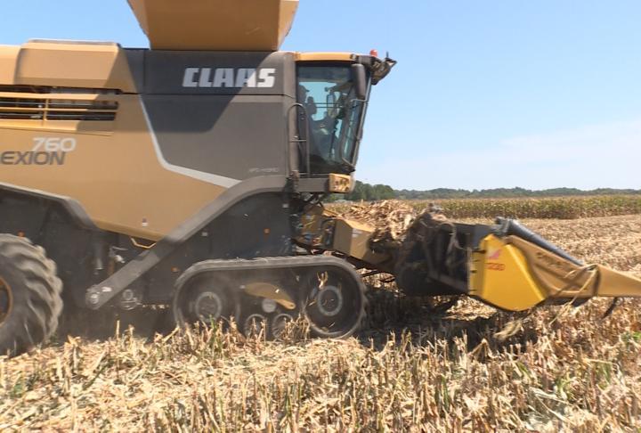 Farmers starting to harvest corn