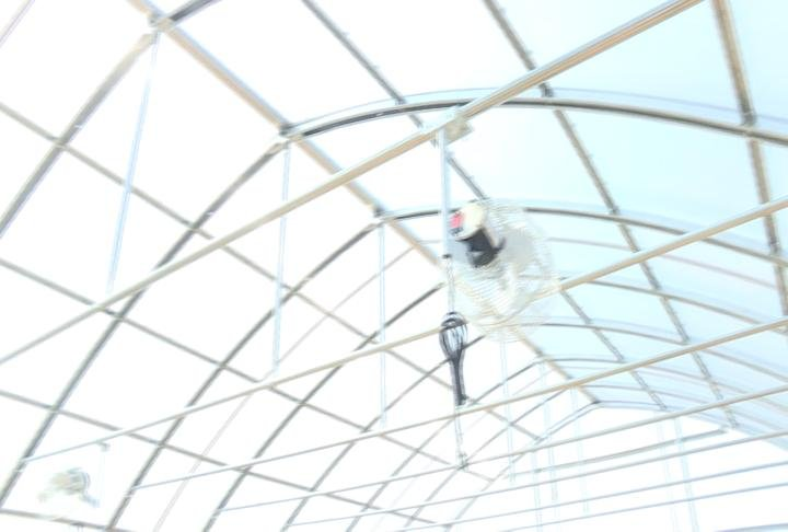 The top of the greenhouse