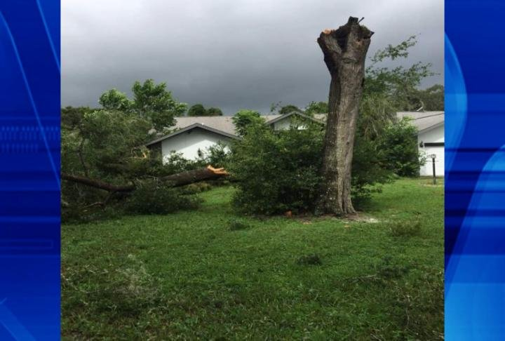 Damage of trees that fell outside homes.