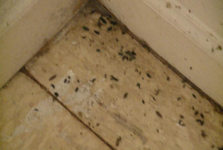 Mice droppings around the whole apartment.