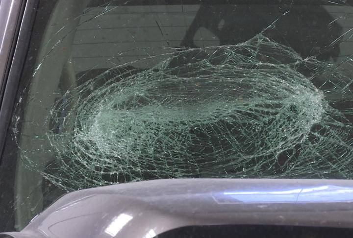 Auto body shops have seen an increase in deer collisions.