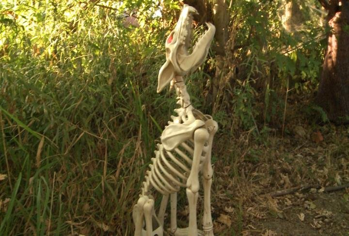 Halloween decoration placed in a yard.
