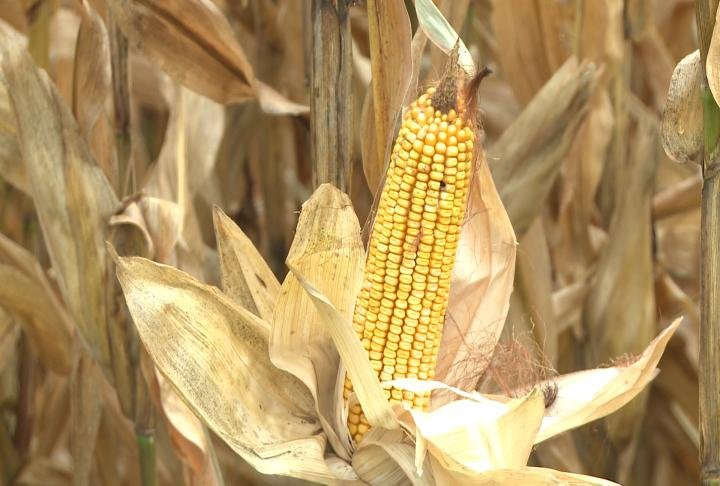 Many farmers said the wet conditions won't impact crop yields.