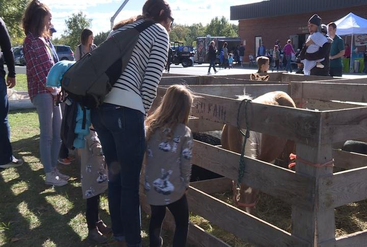 Children were able to see and pet animals.