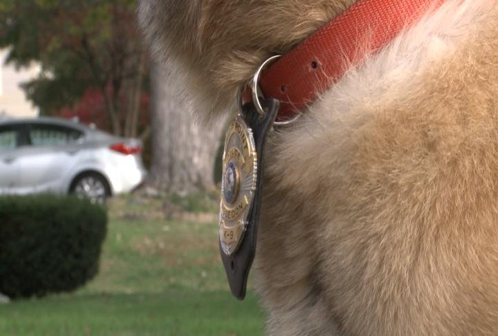 A Camp Point police badge hangs from Poseidon's collar.