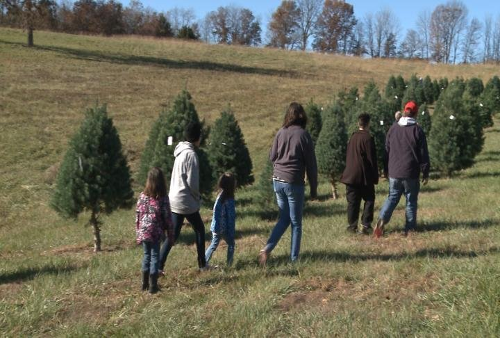 Families were buying trees on Friday.