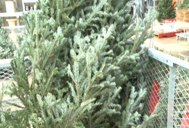 Another safety tip, make sure your tree is at least three feet from any type of open flame or heating source.