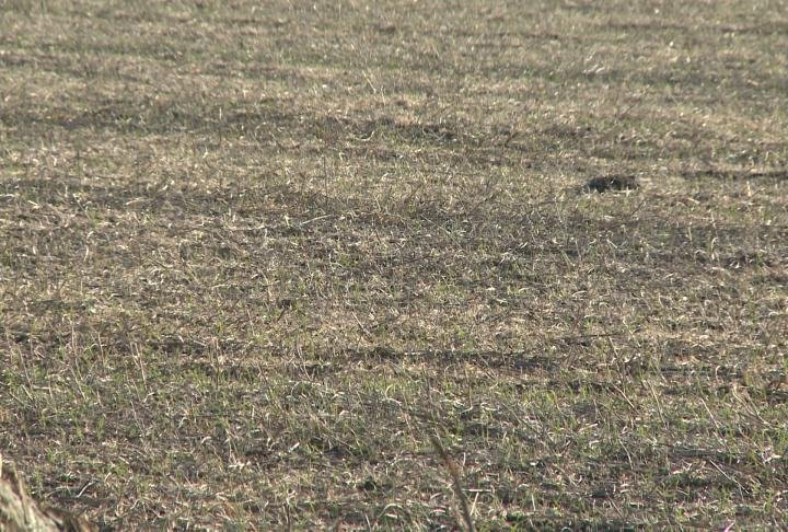 Farmer Brent Hoerr said the warmer temperatures are helping cover crops grow.