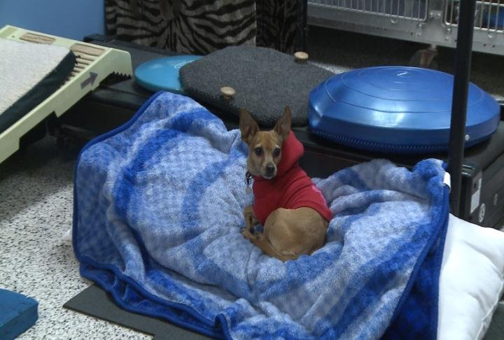 With cold temperatures expected this week a local veterinarian said you should bring your pets inside if you can.