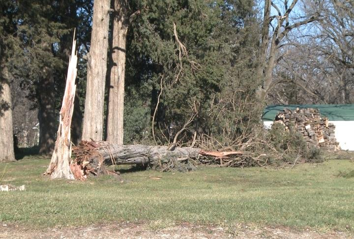 Trees knocked down on County Road 283