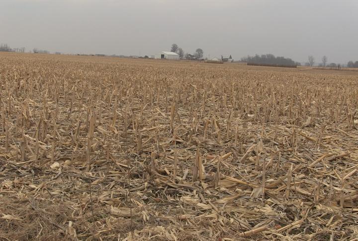 The average monthly price for corn is trending below $3.50 per bushel.