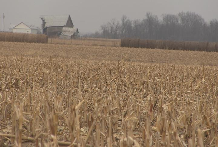 Missouri corn field during the month of January.
