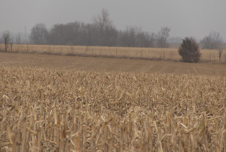 Corn field in Marion County, Missouri.