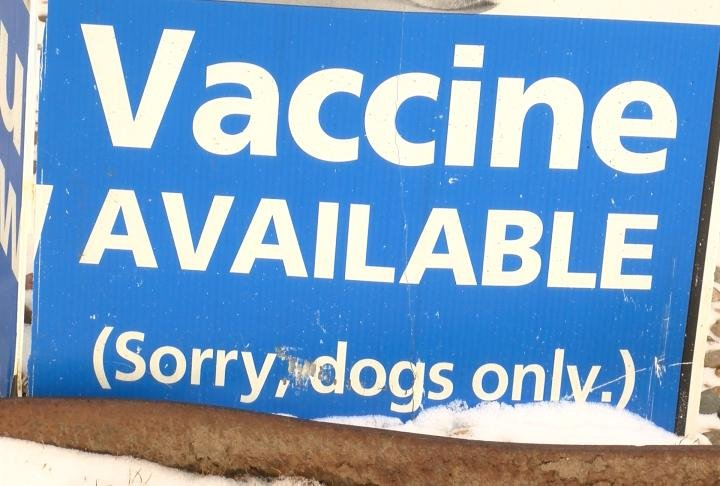 A local veterinarian said you should vaccinate for dogs for flu.