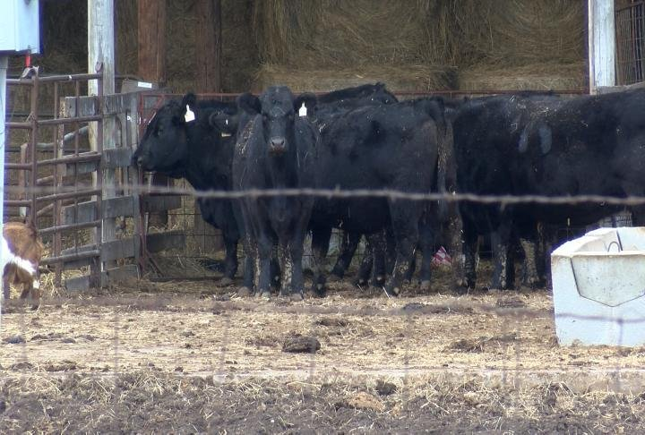 Haerr's family also grows row crop and farms cattle.