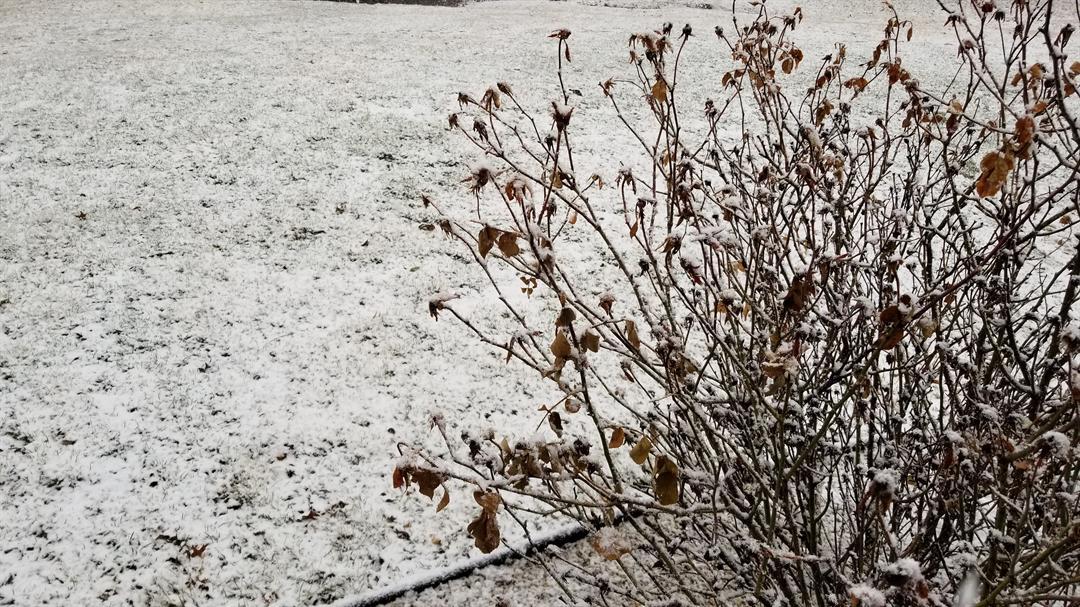 Sunday morning snow.