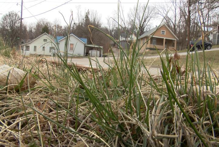 Grass that will soon be cut.
