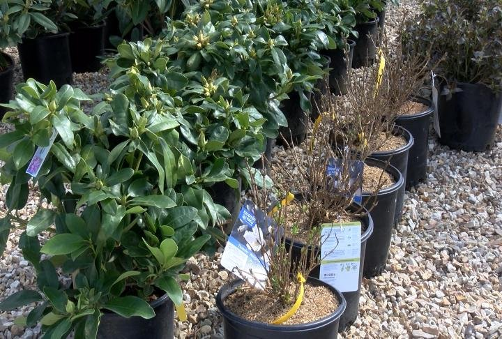Bergman Nurseries said it's been too cold this spring and most plants outside are still in the dormant stage.
