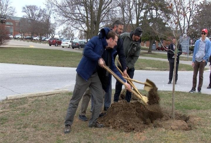 A new tree being planted at HLGU.