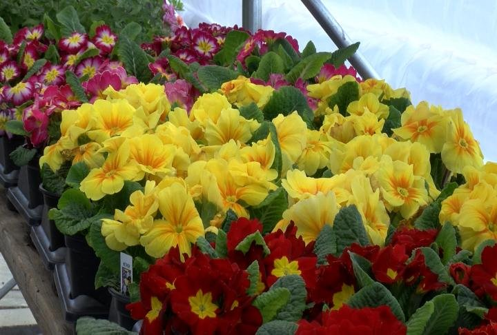 The garden center said Wednesday was their first day of sales this season