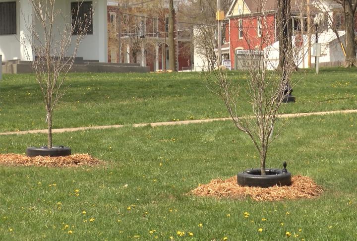 Jacksonville celebrates Arbor Day with next generation