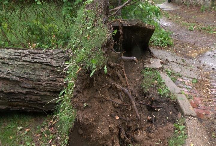 The tree uprooted.