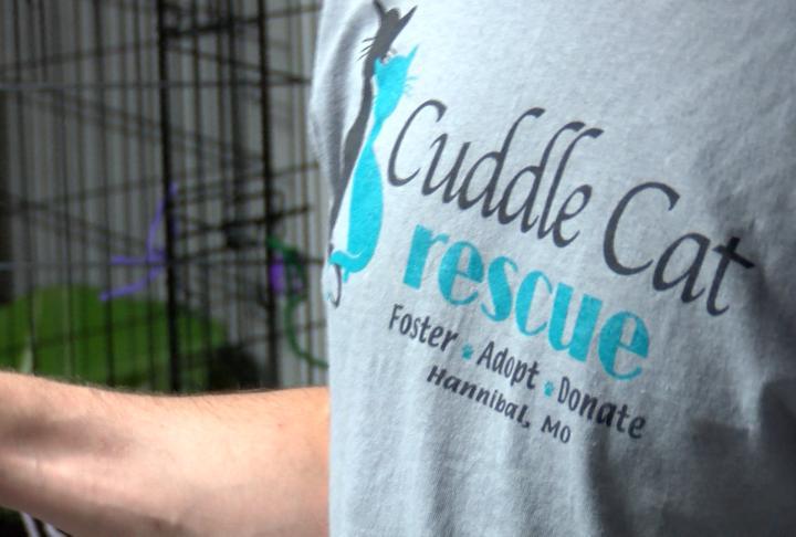 Cuddle Cat Rescue