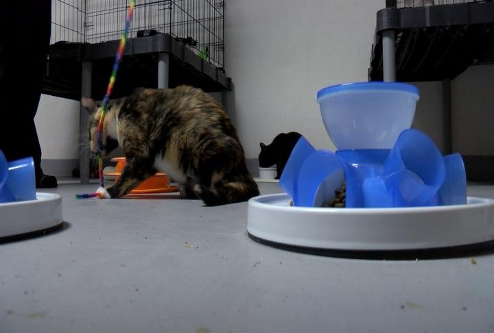 The organization rescues cats