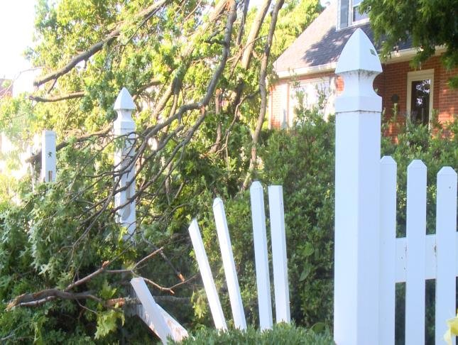 Trees lay on the ground after crashing through a fence Monday night.