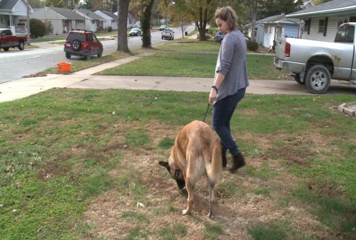 Former Camp Point Chief Steve Patterson's daughter walks Poseidon around the yard.
