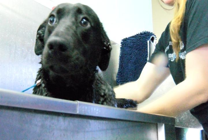 Eboney gets a bath.
